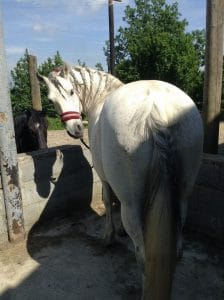 horse-riding-at-vernasca-vicenza